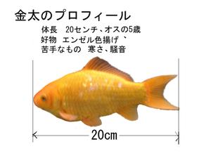 Kinntapurohiru1