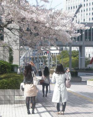 Totyounosakura1_2