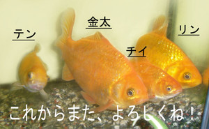 Kinngyo1_2
